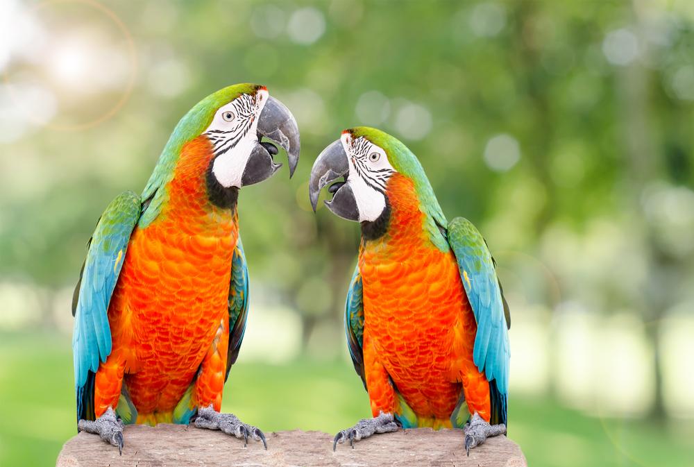 Communiquer efficacement, en m'adaptant au style de mon interlocuteur